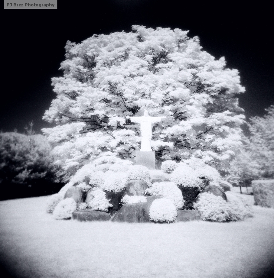Merry Christmas ( in Infrared )