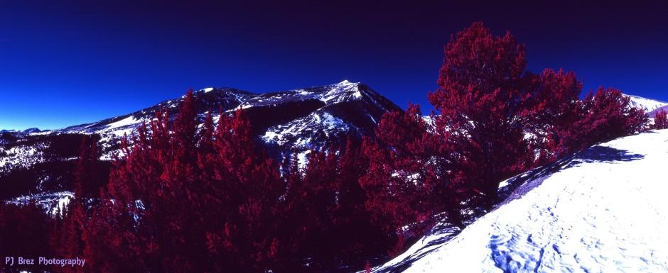 color IR panorama 4